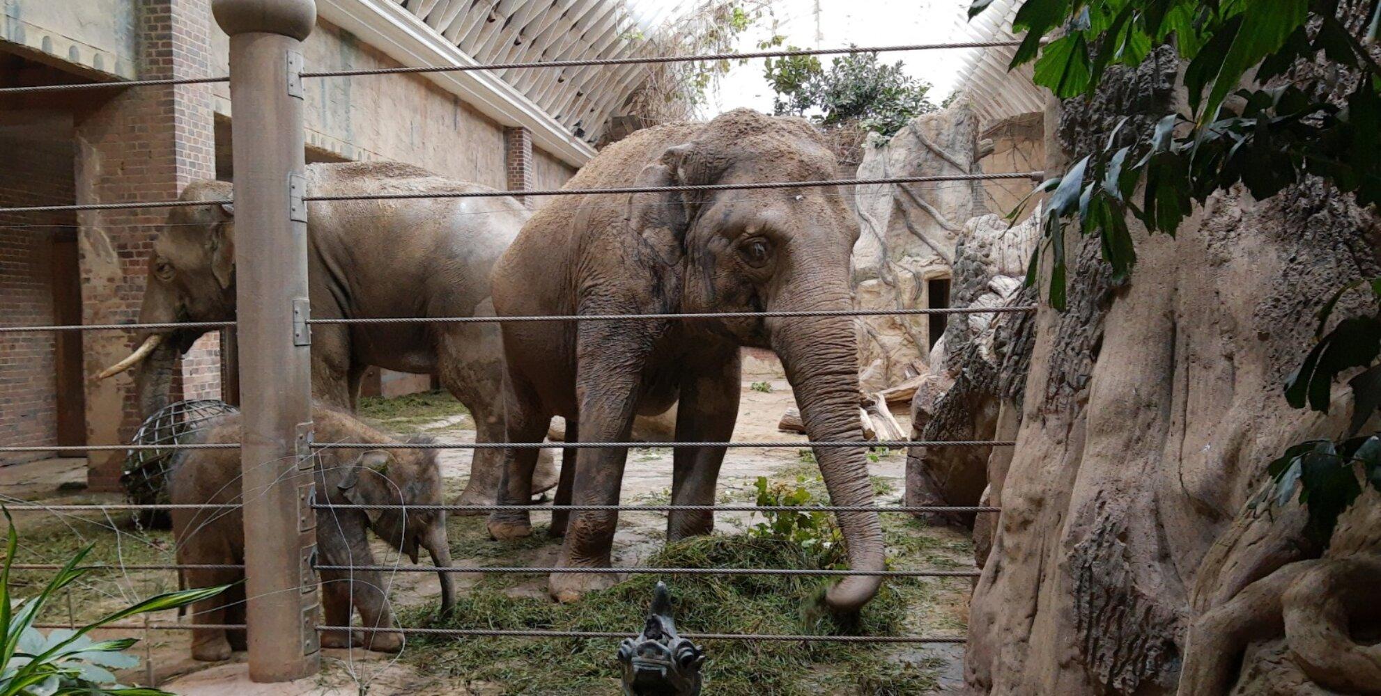 Indischer Elefant im Leipziger Zoo © SK